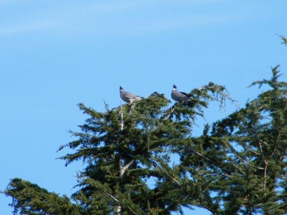 petit plus sur nos oiseaux dans le secteur   de FOUAY