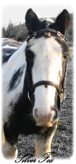 Mes chevaux ? Ma vie ♥.