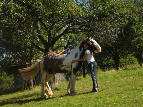 """"""" Si un jour mon cheval et moi venions à tomber, vérifiez bien qu'il se relève avant de vous occupez de moi, si il ne se relève pas, alors laissez moi """" ♥"""