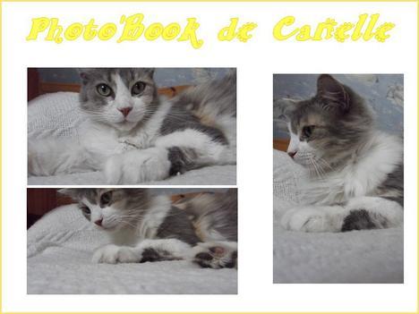~ Photo'Book de Canelle ♥ ~