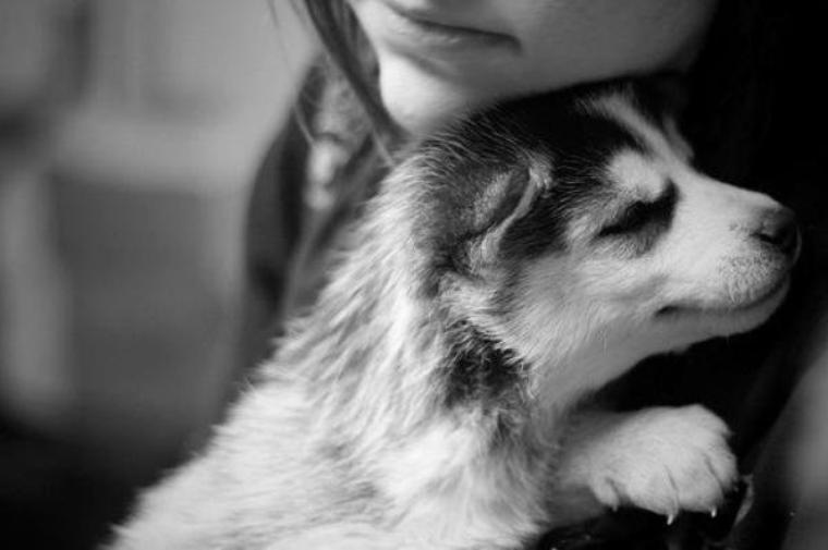 Her wolf love