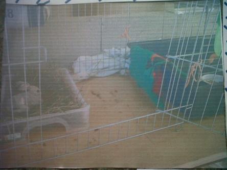 La cage de Pompon ( en été )