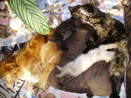 2012-2013 aidez nous à sortir des chats de fourrière BESOIN DE FA et d'ASSOCIATIONS