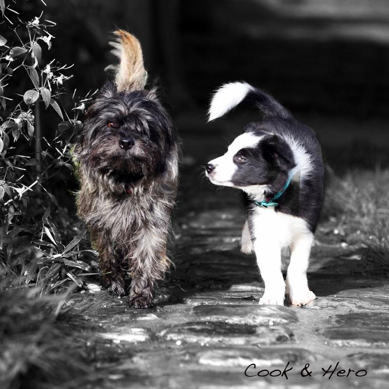 Hero & Cook, les meilleurs des chiens <3