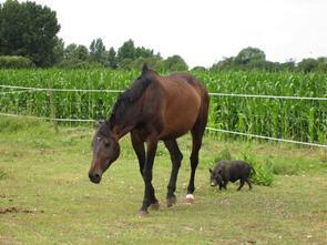 """Un cheval vaincu n'est pas convaincu."""