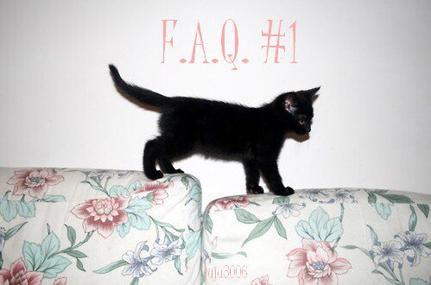 F.A.Q #1 ♥ !