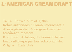 Race n°2 : L'American Cream Draft
