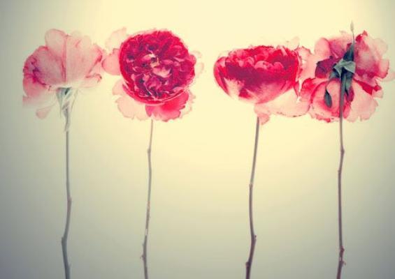 ✿ Tu sais, les roses ont aussi des épines ✿
