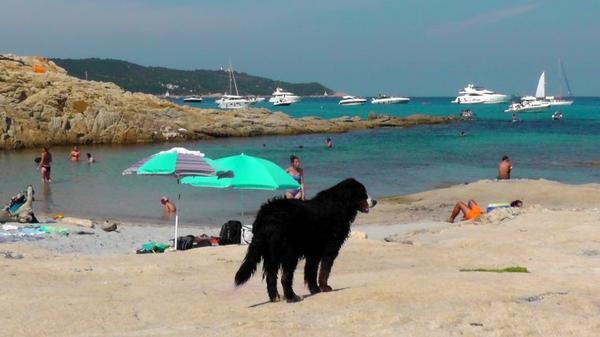 """Pour les bonnes baignades en région """" Paca """" avec son animal préféré ..."""