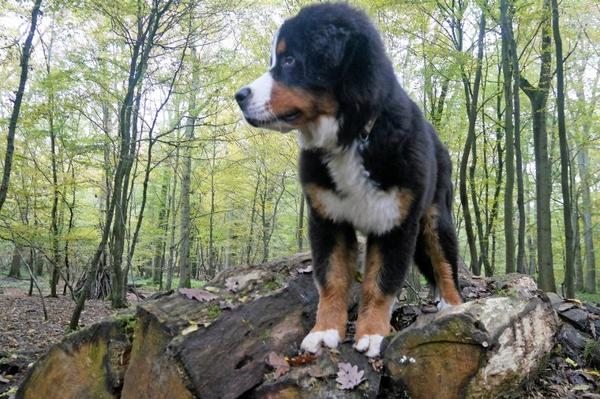 Masha 4 mois et demi , une de ses passions : grimper ! :)