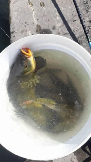 Bonne partie de pêche en 30 minutes