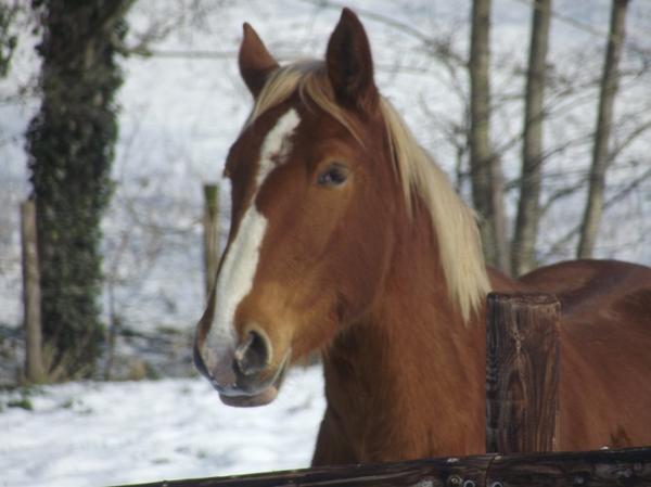Ce grand Poney' qui est magnifique, qui profite de sa vie avec son bon petit caractère.