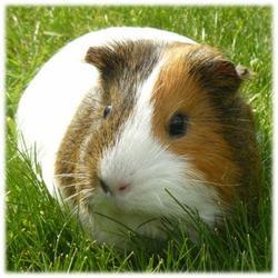 Avoir un animal domestique entraîne certaines contraintes. Il faut en être conscient et être prêt à veiller sur lui tout au long de sa vie. Mais il apporte aussi énormément à son maître.