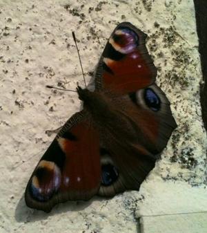 Le plus beau papillon n'est qu'une chenille habillée