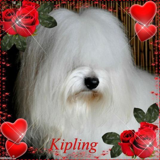 Je vous donne tout mon amour signé : KIPLING
