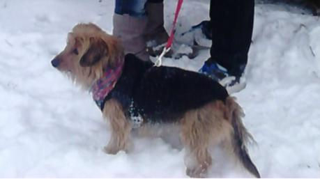 Mon chien Pitt (l)