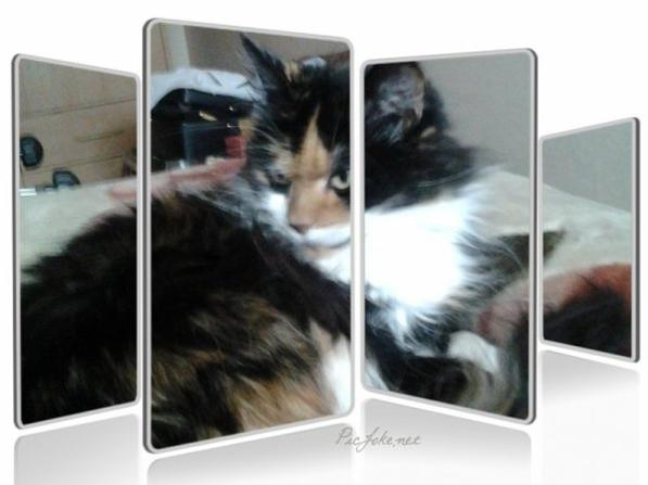 PHOTO MONTAGE DE MON CHAT CALINE