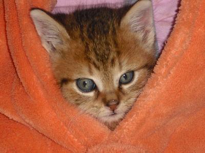 Mon chat, C'est le miens <3 ( babychou)