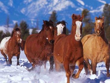 chevaux ;)
