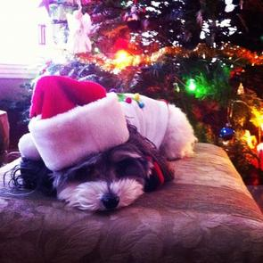 Carly Christmas