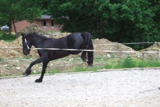 Chapitre 4 : Un cheval vraiment sauvage...