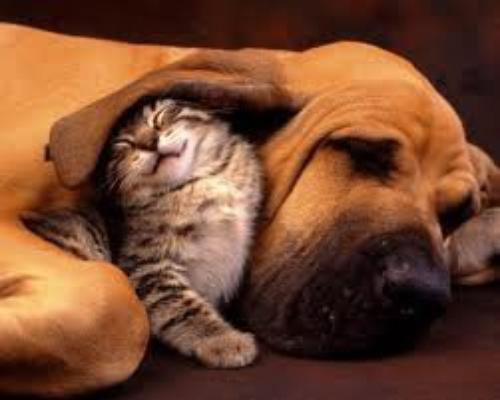 ♥ l'amitié ♥ [a toutes les personnes qui compte pour moi: mes chewies, ma meilleures...]