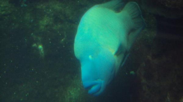 Nausicäa, le monde sauvage de la mer à notre portée !