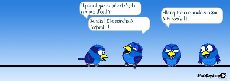les birds du lundi...bis ..!