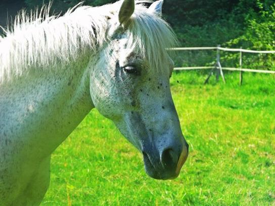 Monter un cheval donne un goût de liberté.♥