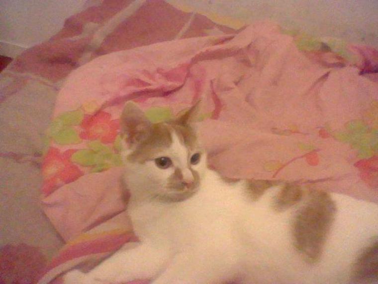 mon chat ☺ ☻ ♥
