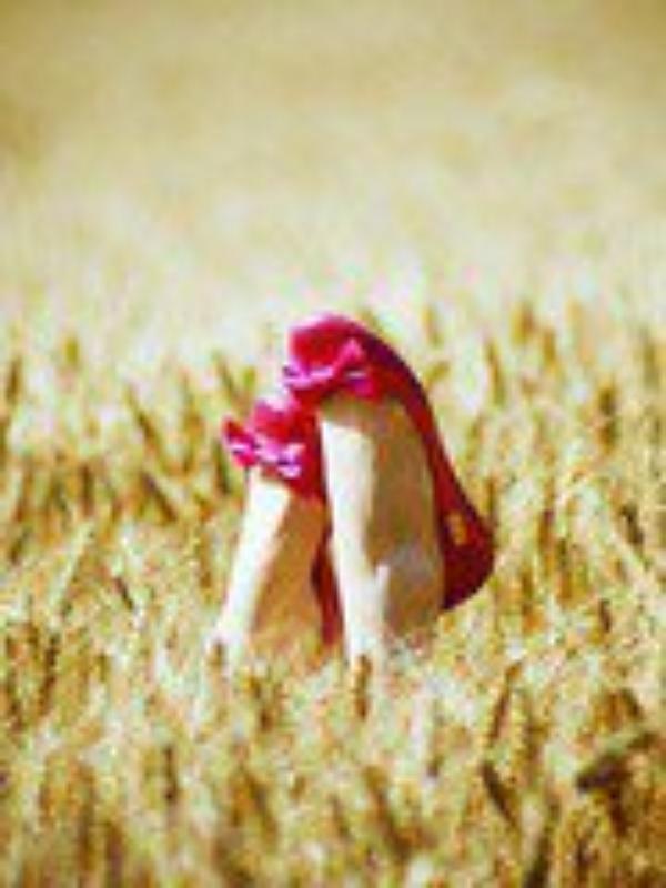 champs de blés