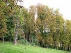 Est-ce que les arbres poussent ?