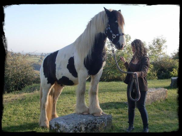 Mon cheval c'est le roi du monde !