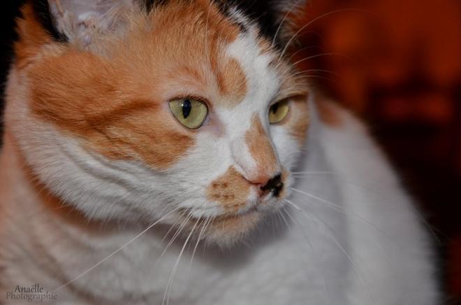 Mon chat est un vrai mannequin