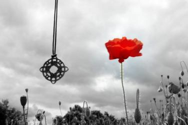 Coquelicot - Poppy - Mohn - Amapola - Papavero - Mak - Keshi