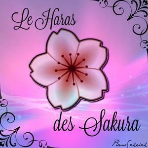 Le Haras des Sakura !