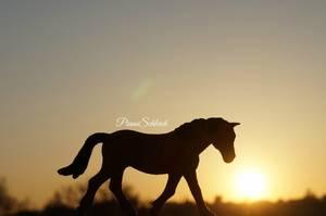 Les couchers de soleil : Un amour fou ~