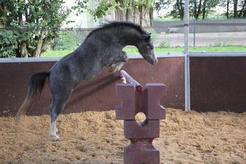 Quelque chevaux du club (suite)