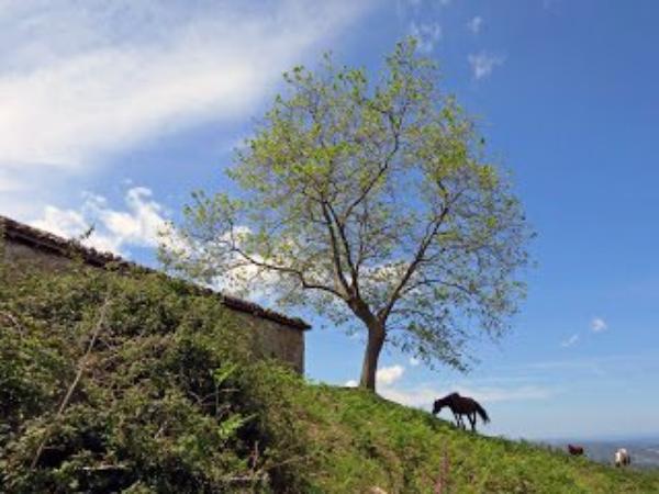 Le dicton du 17 mai Pays Basque