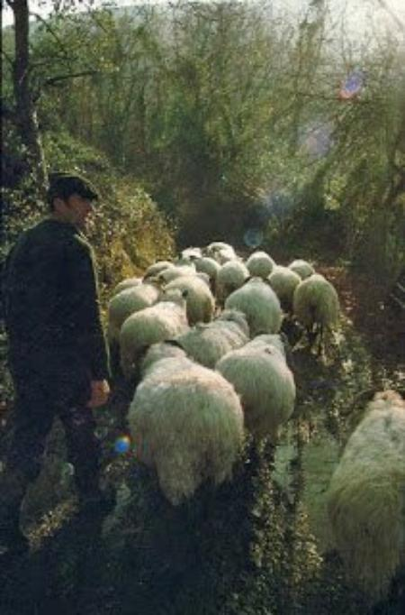 Le dicton du 08 Juin Pays Basque!