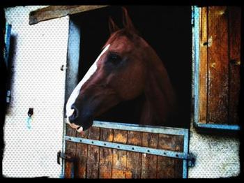 L'équitation, le seul sport individuel qui se pratique à DEUX