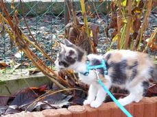Vanille ; un petit chat exceptionnelle