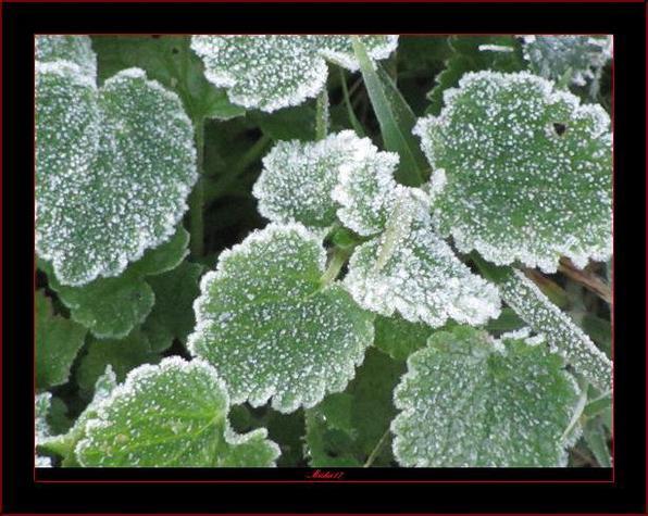Premières gelées de la saison