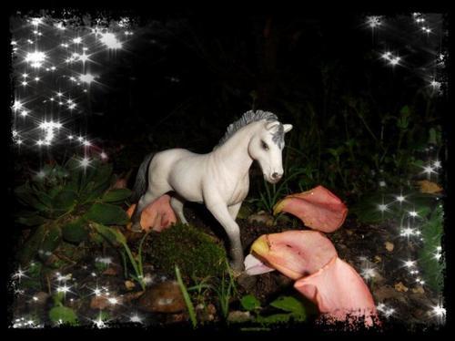 Photos pour le show de mamalab (  http://shetlands-poneys.skyrock.com/)