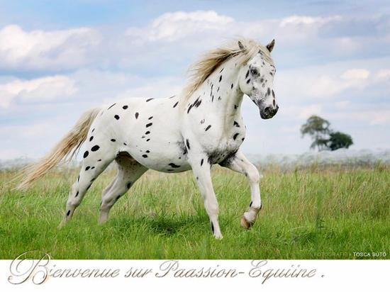 """Cela ne s'explique pas, sa se vie, la passion, le cheval"""