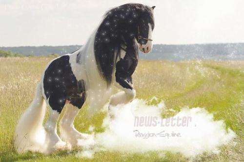 """""""Monter un cheval vous donne un goût de liberté"""""""