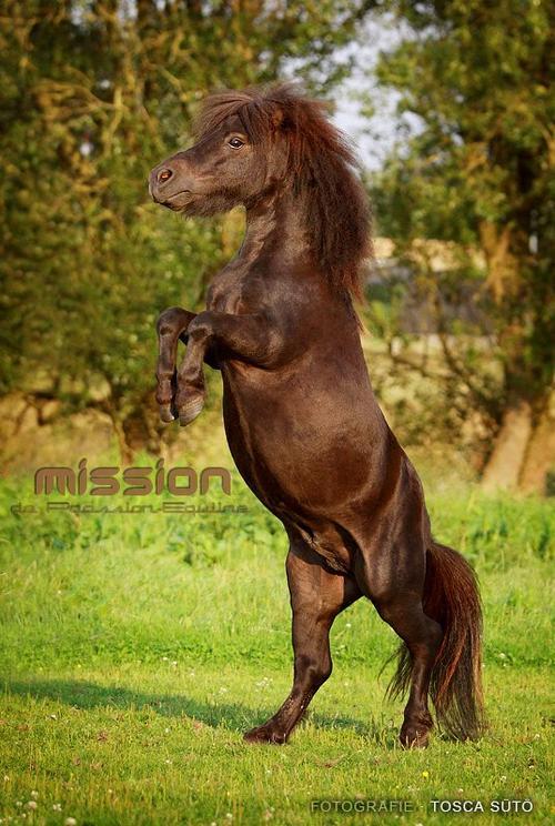 Le cheval n'a pas demandé à faire de l'équitation. Le premier devoir du cavalier, c'est donc d'essayer de lui faire apprécier ce boulot.