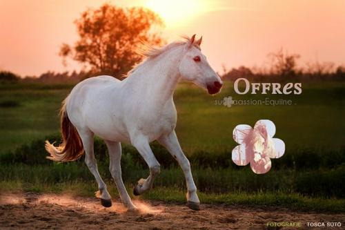 """""""L'équitation le seul sport individuel qui se pratique à deux"""""""