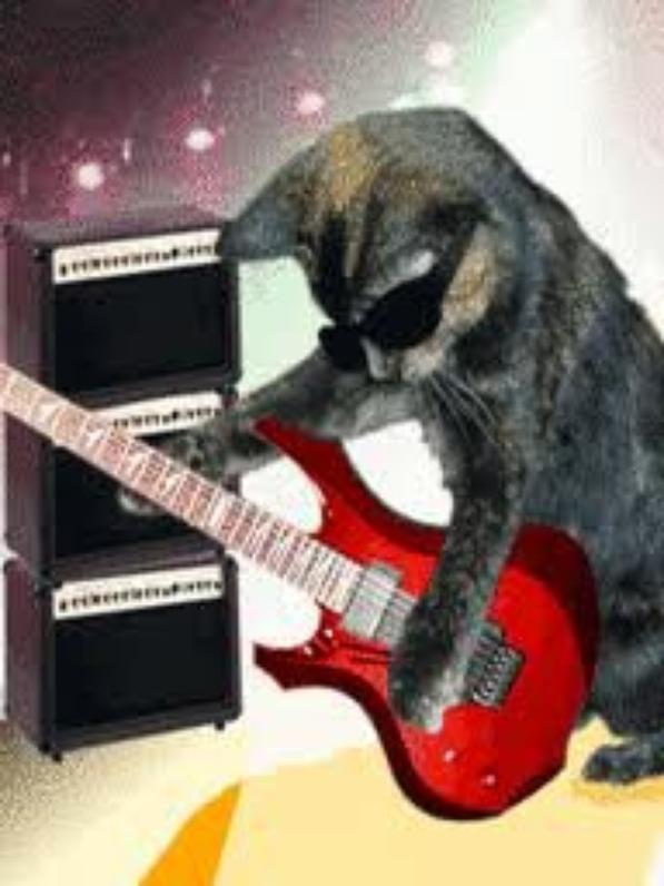 Les chats jouent de la guitar aussi (l)(l)(l) :D !!!