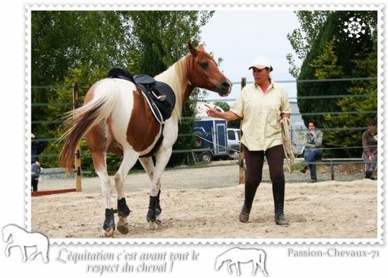 Equitation & Confiance ♥